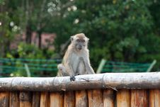 Free Macaque On The Fence Stock Image - 23505061