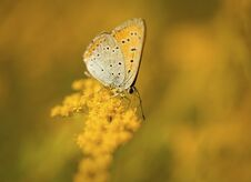 Free Butterfly Closeup On The Yellow Flower Royalty Free Stock Photos - 23508328