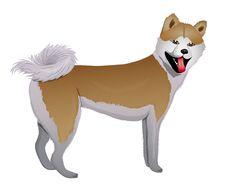 Free Akita Inu Japanese Dog Royalty Free Stock Photography - 23513297