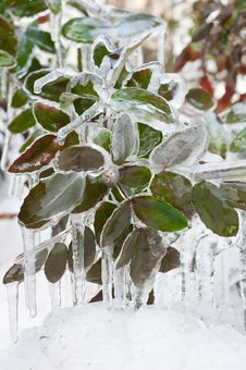 Free Frozen Leaves Stock Photography - 23514482