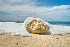 Stone On The Beach Royalty Free Stock Photos