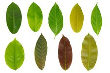 Free Leaf Set Stock Image - 23519791