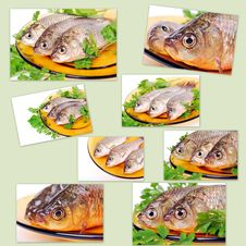 Free Fish Royalty Free Stock Images - 23522049