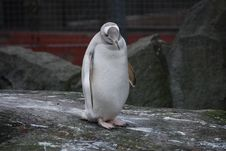 Free Penguin On Rock Stock Photography - 23528422