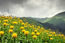 Meadows Of Abkhazia Stock Image