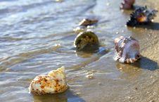 Free Cockleshells Lie On Sand Stock Photo - 23529700