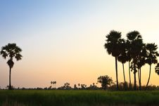 Free Rice Fields Royalty Free Stock Images - 23529969