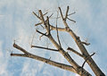 Free Branch Diagonal Royalty Free Stock Image - 23530976