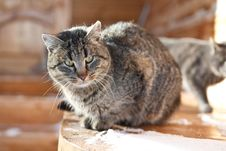 Free Cat Snow Stock Photos - 23531663