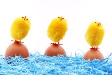 Free Chicks Cleaning For The Easter Royalty Free Stock Photos - 23534138