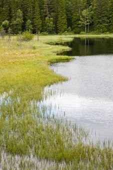 Free Bog At The Forest Lake Royalty Free Stock Image - 23536886