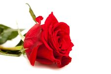 Free Beautiful Red Rose Stock Images - 23538974