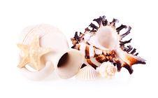 Free Seashells, Starfish And Pitcher Stock Photography - 23538982