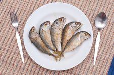 Free Fried Of Mackerel Fish Royalty Free Stock Photo - 23546905