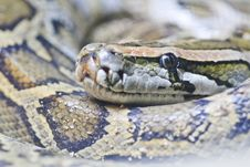 Eye Of Snake Royalty Free Stock Photography