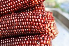 Free Boiled Purple Corn Stock Photos - 23549013