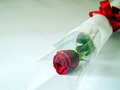 Free Red Rose,cross-processed Royalty Free Stock Photography - 23550887