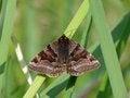Free Moth Royalty Free Stock Photo - 23555135