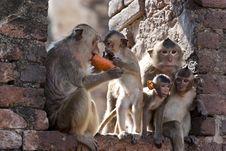 Free Monkey Time Stock Photos - 23550723