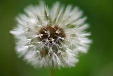 Free Drop Dandelion Royalty Free Stock Photos - 23551878