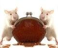 Free Rat Royalty Free Stock Photography - 23568217