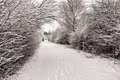 Free Snow Covered Path Royalty Free Stock Photography - 23568457