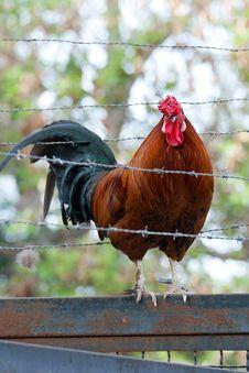 Free Prisoner Cock Stock Photos - 23562283