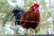 Free Prisoner Cock Stock Images - 23562424