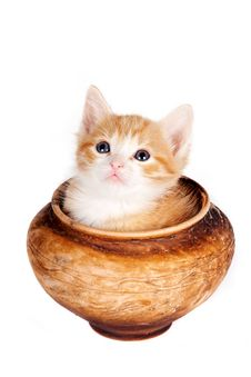 Free Red Kitten In A Clay Pot Royalty Free Stock Photo - 23563935