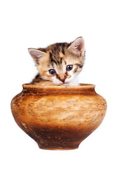 Free Multi-colored Kitten In A Clay Pot Stock Photography - 23563972