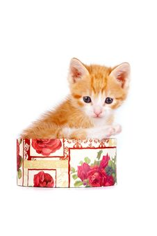 Free Red Kitten In A Gift Box Stock Photos - 23564033