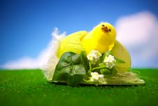 Free Happy Easter Chick Stock Image - 23567271