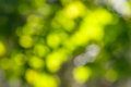 Free Beautiful Green Bokeh Royalty Free Stock Photos - 23570088