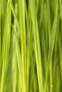 Free Fresh Green Grass Stock Image - 23578501