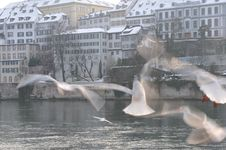Free Birds In Basel Stock Image - 23570041