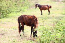 Free Horses Royalty Free Stock Photo - 23570105