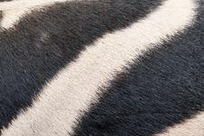 Free Zebra Skin Pattern Background Stock Photo - 23570150