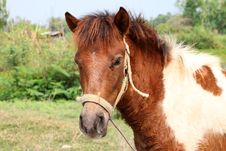 Free Horse Royalty Free Stock Photography - 23570317