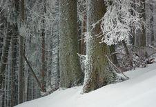 Free Winter Landscape Royalty Free Stock Photos - 23571068
