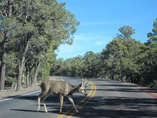 Deer On The Road Royalty Free Stock Images
