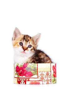 Free Multi-colored Kitten In A Gift Box Royalty Free Stock Photography - 23581067