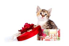 Free Multi-colored Cute Kitten In A Gift Box Royalty Free Stock Photo - 23582055