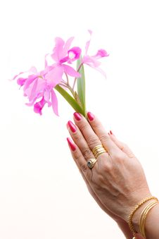 Free A Woman Hold Orchid Stock Photos - 23586873
