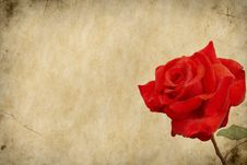 Delicate Rose On Grunge Background Stock Photos