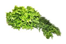 Free Fresh Green Lettuce Frillice Salad And Dill Stock Image - 23588931