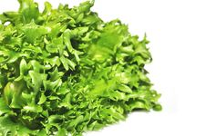 Free Fresh Green Lettuce Frillice Salad Royalty Free Stock Images - 23588979