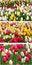 Free Tulip Collage Royalty Free Stock Image - 23580696