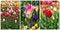 Free Tulip Collage Royalty Free Stock Image - 23580726