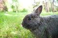 Free Rabbit Stock Photography - 23595192
