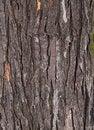 Free Tree Bark Texture Royalty Free Stock Photography - 23595737